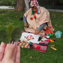Coca leaves reading